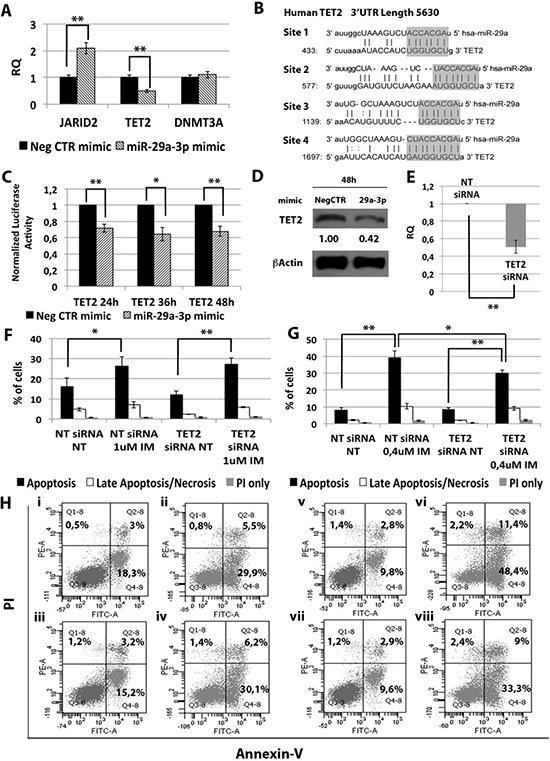 Effects of TET2 silencing on K562 cells' response to IM.
