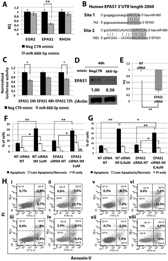 Effects of EPAS1 silencing on K562 cells' response to IM.