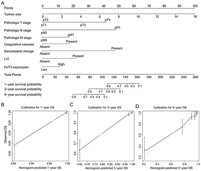 Built-up prognostic nomogram for OS prediction and calibration for it.