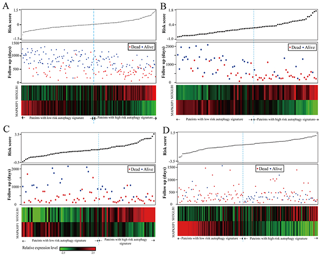 Autophagy related risk score analysis of glioma patients in the four datasets.