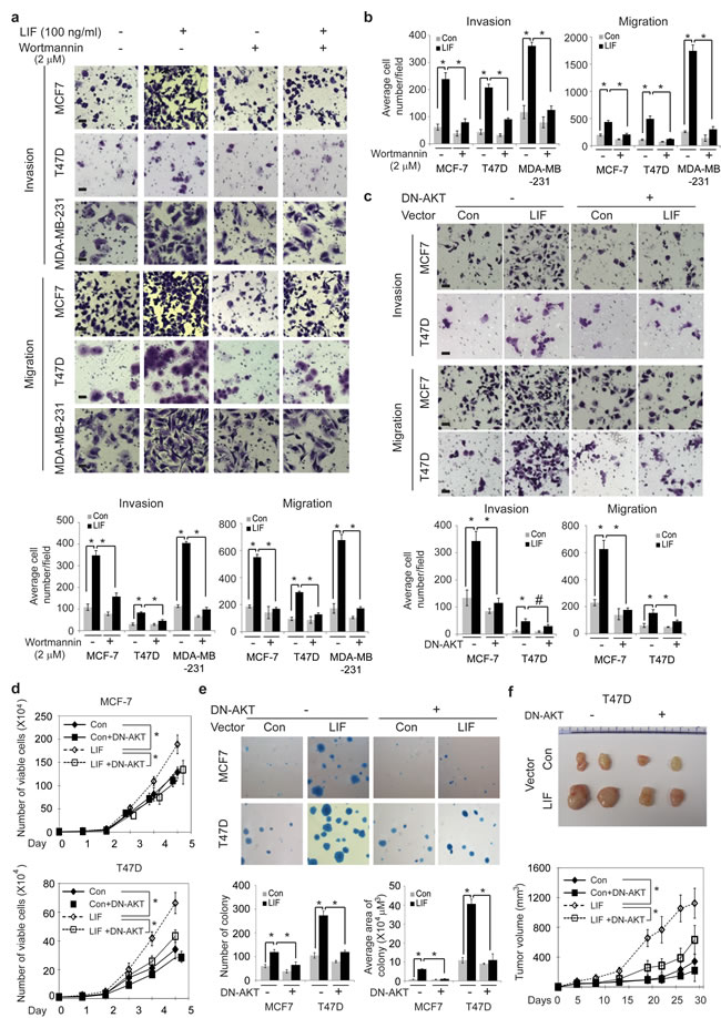 Blocking the AKT signaling inhibits the promoting effect of LIF on tumorigenesis and metastasis in breast cancer cells.