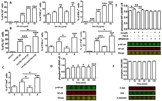 Tim-3 protects HUVECs from ox-LDL-induced proinflammatory response via NF-κB inhibition.