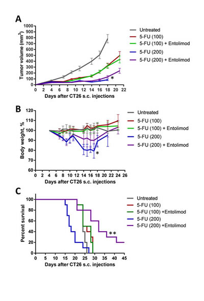 Protection of mice, but not tumors, from 5-FU toxicity by Entolimod in CT26 tumor-bearing mice.