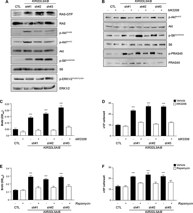 KIR2DL5A/B is a negative regulator of RAS/AKT signaling.