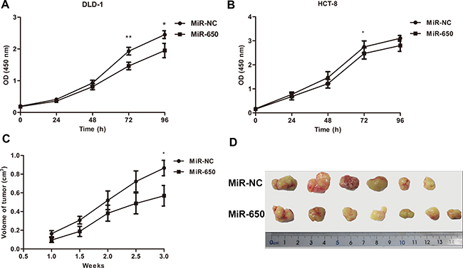 MiR-650 inhibits cell growth in vitro and in vivo.