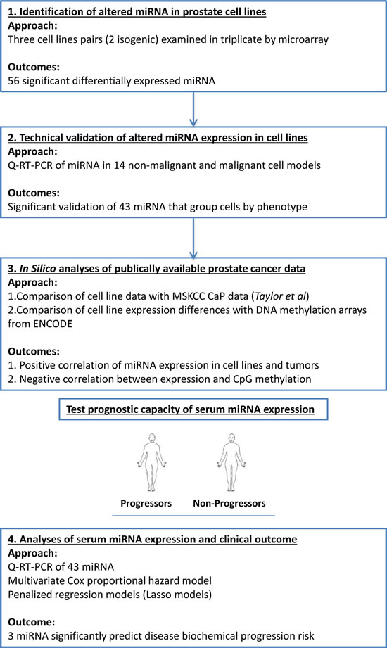 The workflow designed to identify and test the prognostic capacity of miRNA in the serum of patients with CaP.