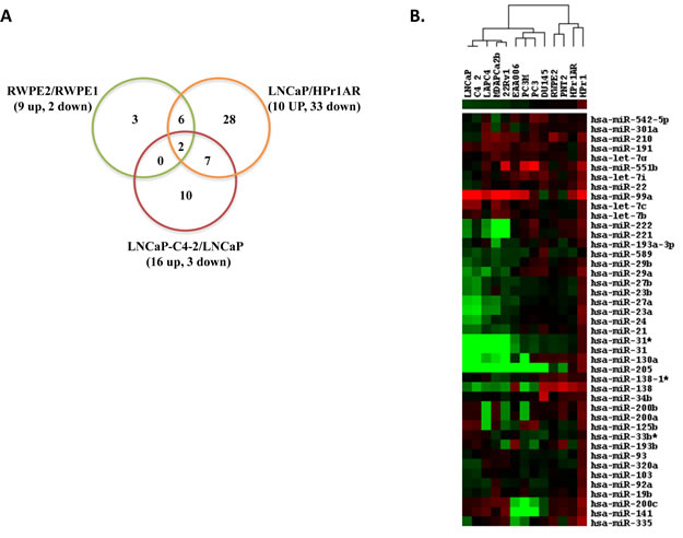 Identification of differentially expressed miRNAs by microarray and Q-RT-PCR in CaP cell lines.