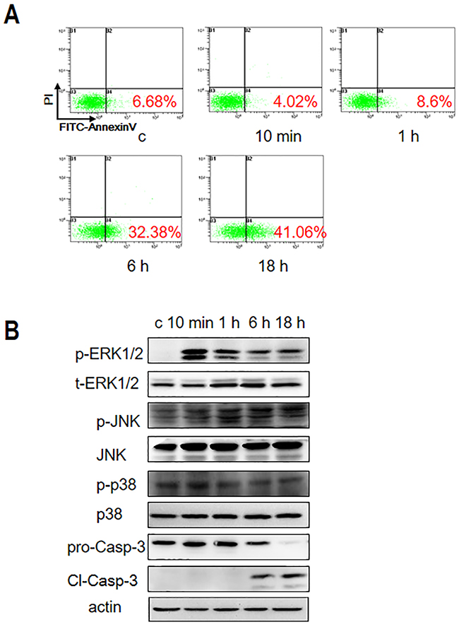 Gal-3 treatment induces Jurkat cell apoptosis.