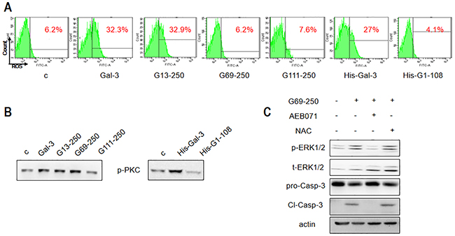Differential apoptotic signaling induced by Gal-3 and its truncated variants.