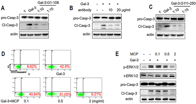 Gal-3-induced T cell apoptosis is inhibited by NT or CRD inhibitors.