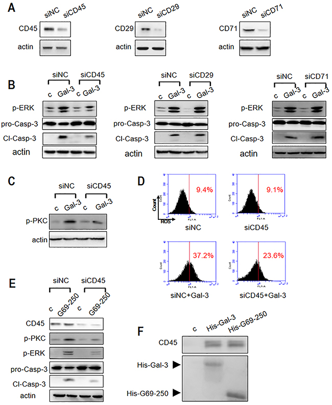 Roles of T cell surface receptor molecules in Gal-3-triggered T cell apoptosis.