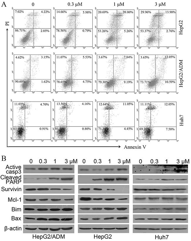 Dalbinol induced apoptosis in HepG2, HepG2/ADM and Huh7 cells.