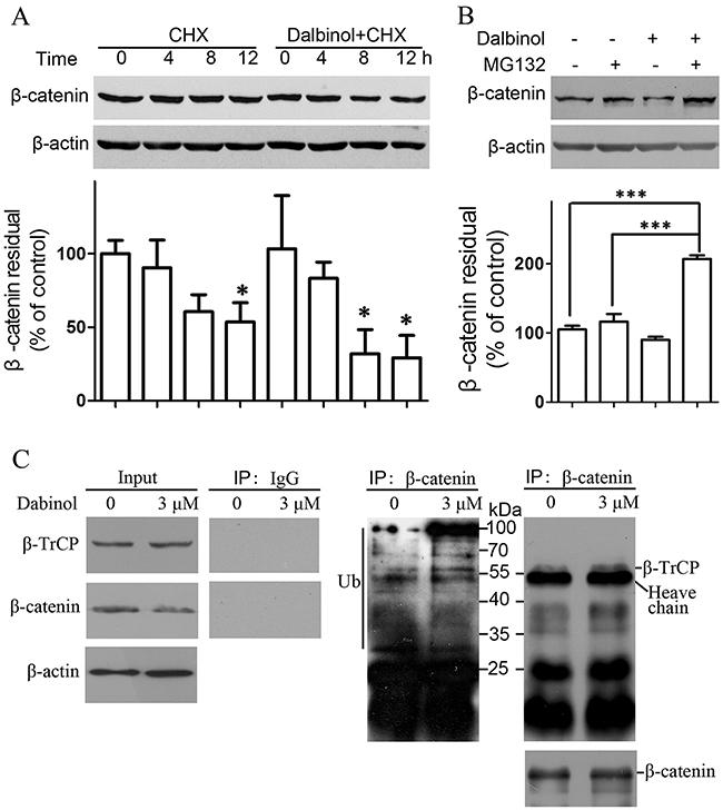 Dalbinol increased β-catenin degradation through the ubiquitin-proteasome pathway.