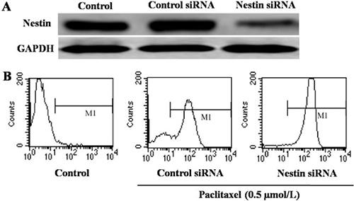 Analysis of apoptosis of Eca-109 cells.