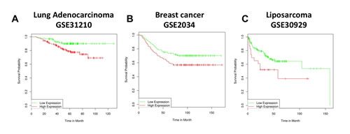 MMP13 expression is a negative prognostic marker in human cancers.