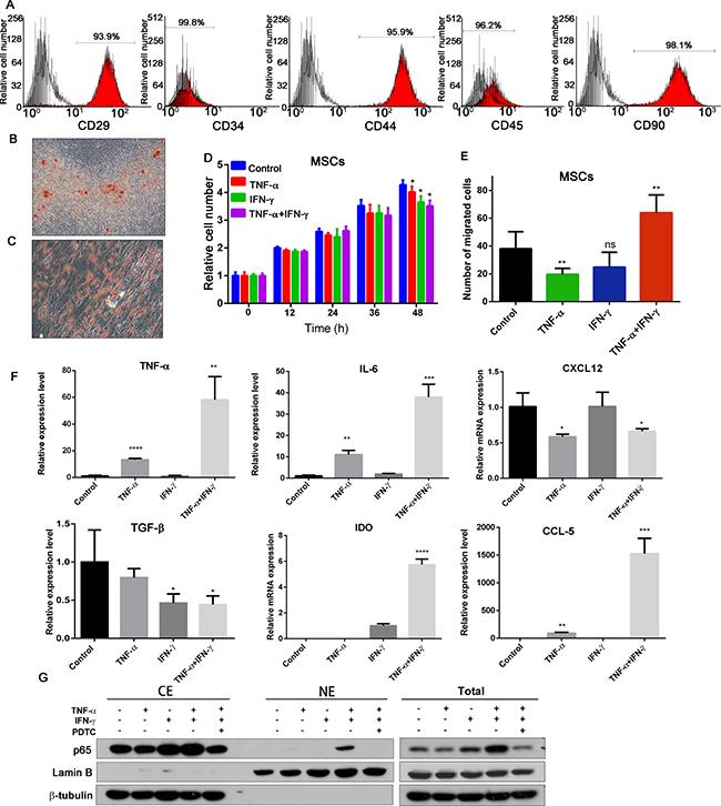 Effects of inflammatory cytokines on MSCs.