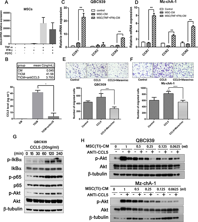 Pro-inflammatory cytokines lead to up-regulation of CCL5 in MSCs.