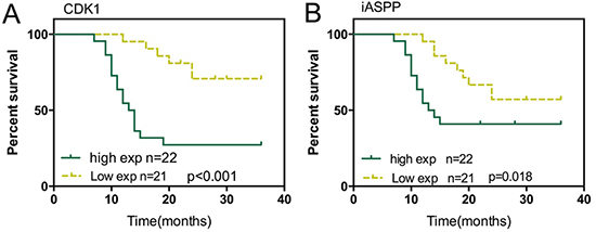 Effect of iASPP and CDK1 expression on prognosis of CRC (A) Kaplan-Meier overall survival curves for 43 patients with CRC classified according to relative CDK1 expression level.