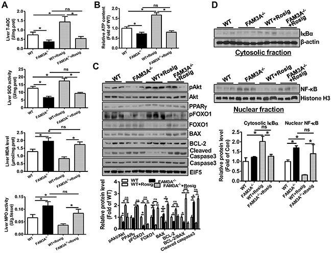 PPARγ activation failed to activate Akt pathway, and repress inflammation and oxidative stress in FAM3A-/- mouse livers with IRI.