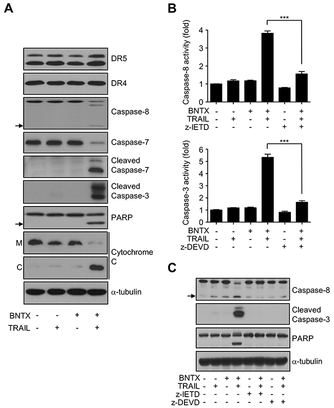 BNTX induces TRAIL-induced apoptosis in AsPC-1 cells through caspase activation.