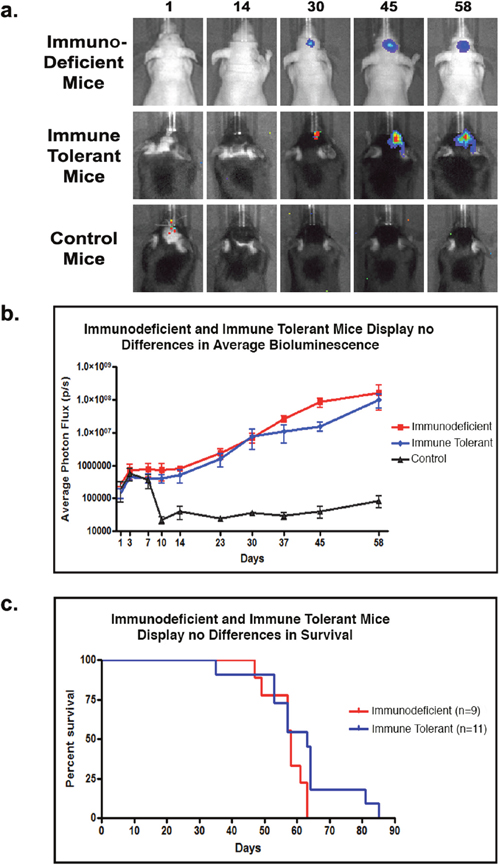 T-cell co-stimulation blockade facilitates human tumor cell engraftment in immune tolerant mice.