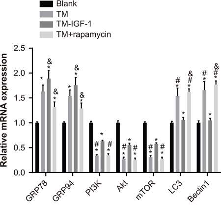 Expression of ERS-related mRNA and PI3K/Akt/mTOR signaling pathway-related mRNA in U266 cells in the blank, TM, TM + IGF-1, and TM + rapamycin groups.