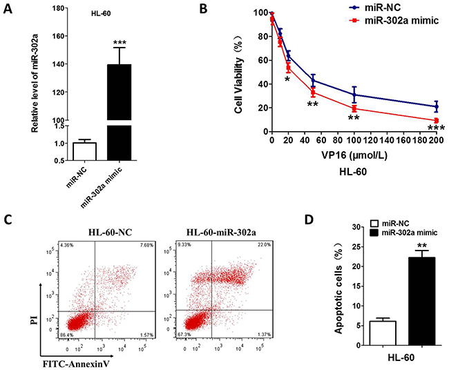 Overexpression of miR-302a enhances the sensitivity to VP-16 in HL-60 Cell.
