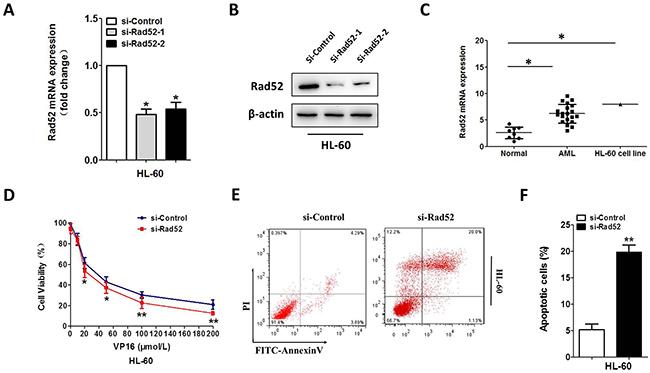 Downregulation of Rad52 increased VP-16 sensitivity of the HL-60 cell.