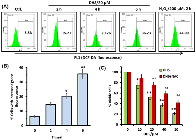 Intracellular ROS is involved in the DHS-induced cytotoxicity in IMR32 cells.