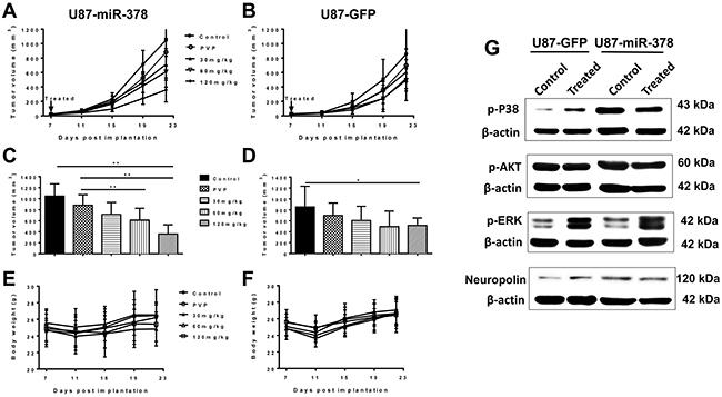 MiR-378 potentiates inhibitory effect of curcumin on GBM growth.