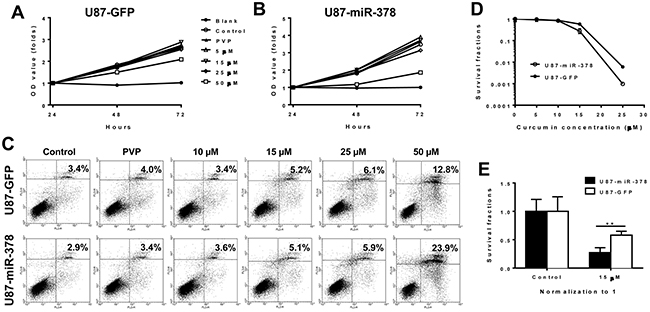 MiR-378 enhances the effect of curcumin by suppressing cell proliferation and inducing apoptosis.