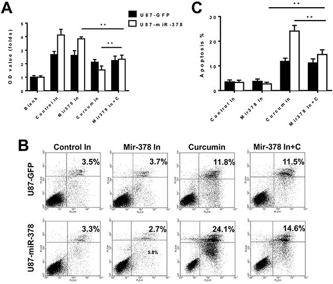 MiR-378 enhanced the sensitivity of curcumin treatment in U87 cells.