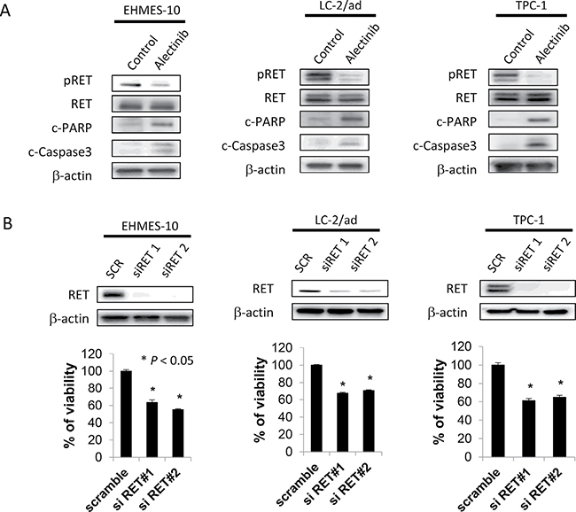 Alectinib induces apoptosis of EHMES-10 cells with NCOA4-RET in vitro.