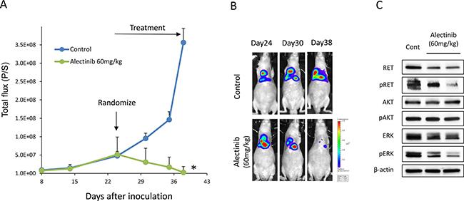 Alectinib delays the intrathoracic progression of tumor cells with NCOA4-RET.