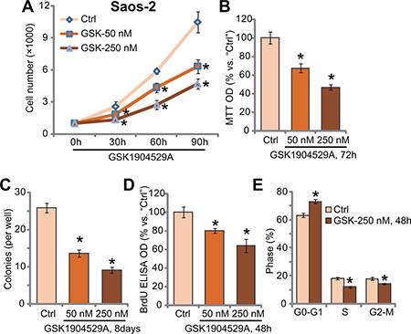 GSK1904529A inhibits Saos-2 cell proliferation.