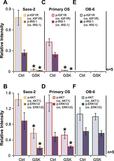 GSK1904529A blocks IGF1R signaling in OS cells.