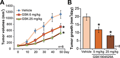 GSK1904529A administration inhibits Saos-2 tumor growth in mice.