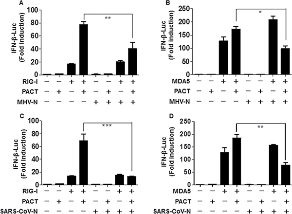 The N proteins of MHV and SARS-CoV inhibit PACT-mediated activation of RIG-I/MDA5.