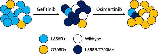 Tumor heterogeneity and clonal evolution.