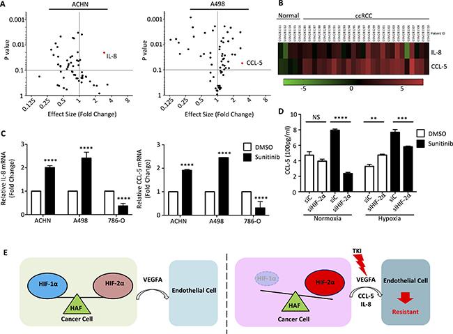 Cytokine RT-PCR Array identified specific cytokines involved sunitinib treatment.