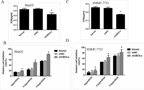 Down-regulation of UBC9 sensitized HCC cells to Doxorubicin.