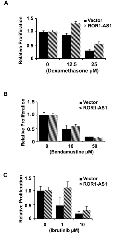 The effect of ROR1-AS1 overexpression on the sensitivity of MCL cells to chemotherapy drugs.