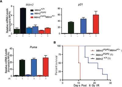 Mdm4 regulates p53 activity.