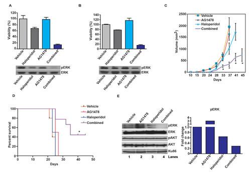 Haloperidol enhances the tumoricidal effect of the EGFR inhibitor, AG1478.