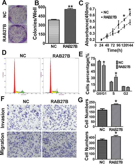 Upregulation of RAB27B promotes proliferation, migration, invasion and G1/S transition in HuH-7 cells.