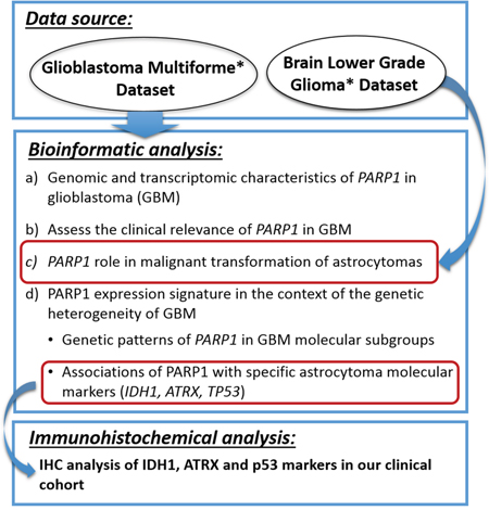 The overview of the analysis strategy for PARP1 characterisation used in this study.