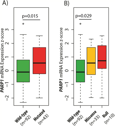 Association between TP53 gene status and PARP1 mRNA expression in glioblastoma.