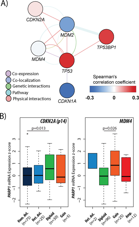 Association between PARP1 and p53 pathway in glioblastoma.