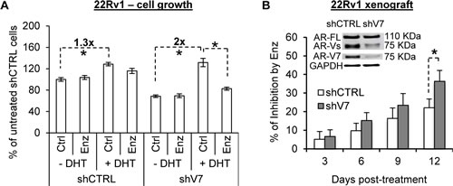AR-V attenuates androgen and enzalutamide modulation of cell growth.