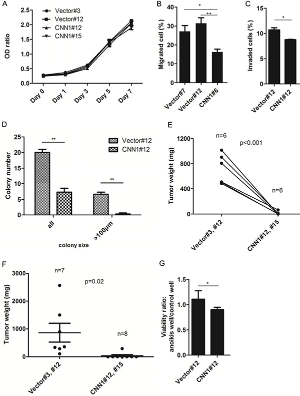 Overexpression of CNN1 in FE-RAS cells results in a suppression of transformation phenotypes.